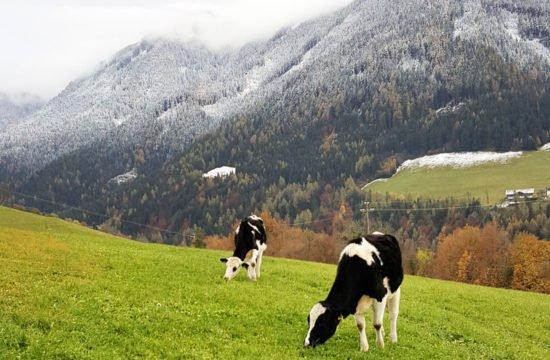 pechererhof-fiè-allo-sciliar-alpe-di-suisi-alto-adige -(2)