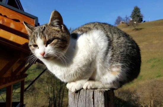 Urlaub am Bauernhof - Pechererhof in Voels am Schlern / Südtirol 1